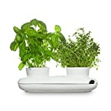 Sagaform Kräutertopf Herbs&Spices, Duo