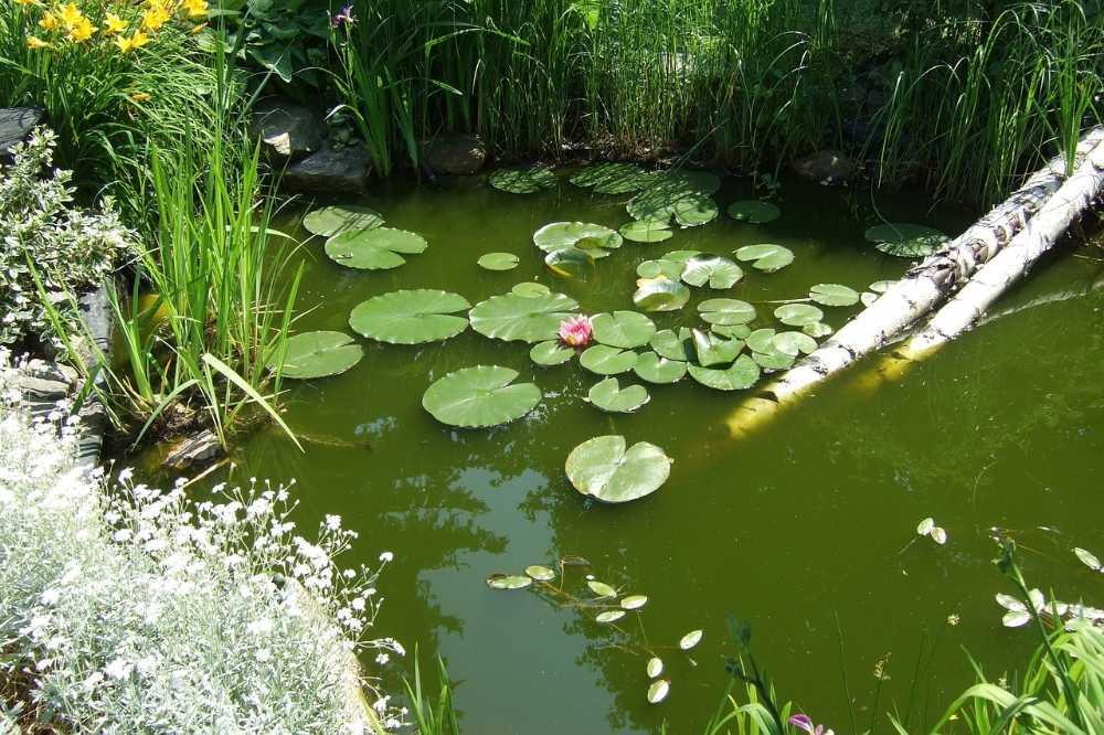 Herbst-Teichpflege-im-Garten