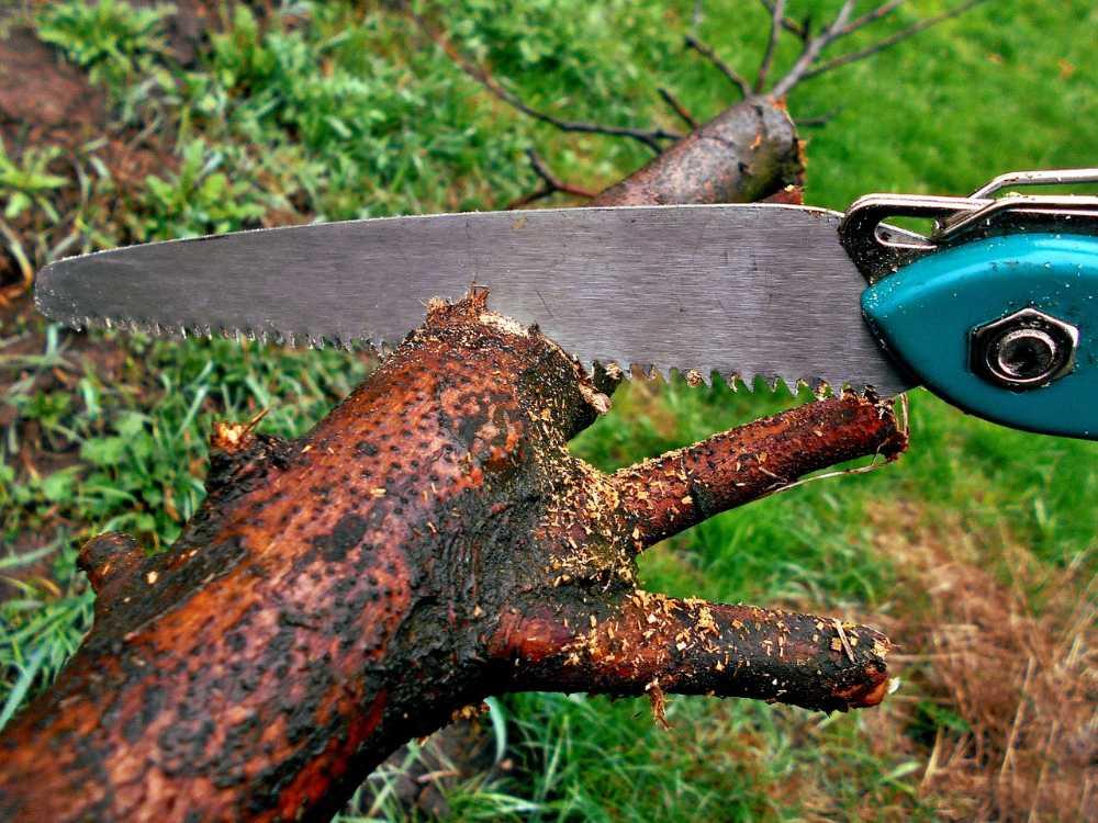 Beliebt Die besten Astsägen und Klappsäge für den Garten im Test IH36