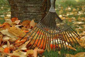 Gartenpflege-Herbst