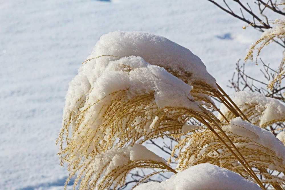 Frostschutz-von-Pflanzen-Winterschutz-im-Garten