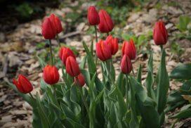 Der-Garten-im-April