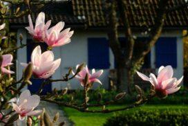 Der-Garten-im-Mai