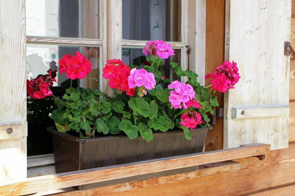 Blumenkasten-mit-Wasserspeicher